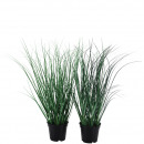 Grass potted, 2 colors, H40,5cm, TO: 9,5, green
